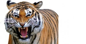 TIGERFeatured_Articles Image